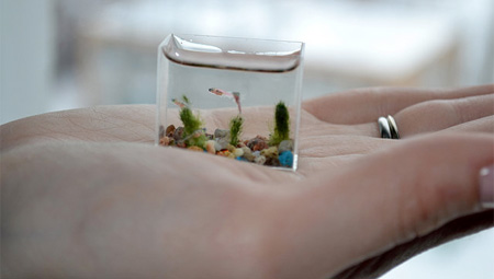 worlds smallest fish tank (5)