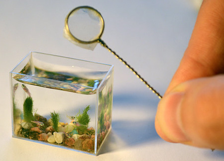 worlds smallest fish tank (4)