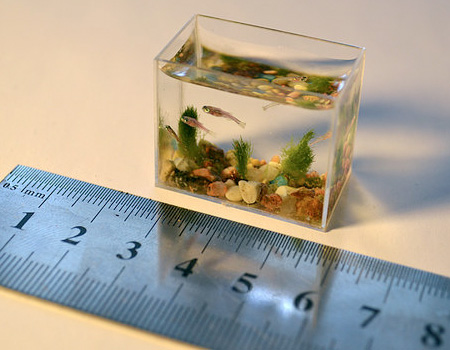 worlds smallest fish tank (3)