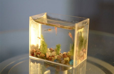 worlds smallest fish tank (2)