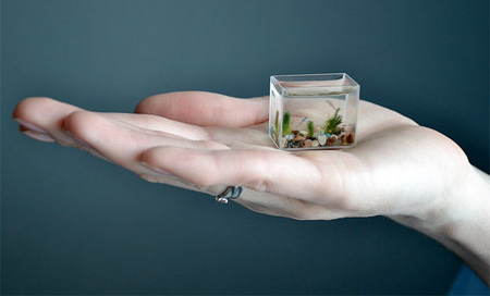 worlds smallest fish tank (1)
